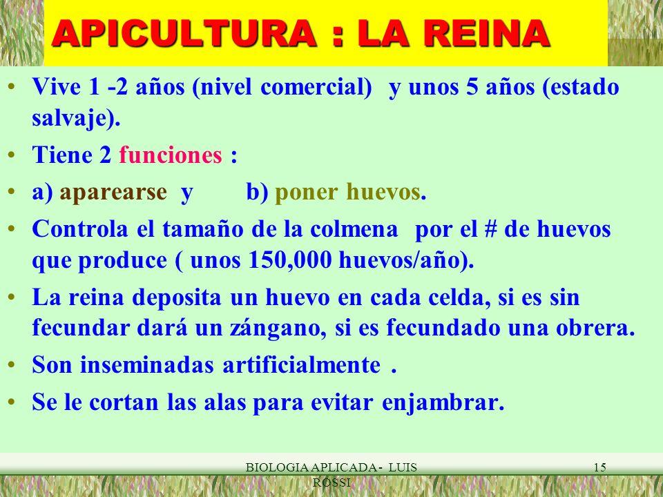 BIOLOGIA APLICADA - LUIS ROSSI 15 APICULTURA : LA REINA Vive 1 -2 años (nivel comercial) y unos 5 años (estado salvaje). Tiene 2 funciones : a) aparea