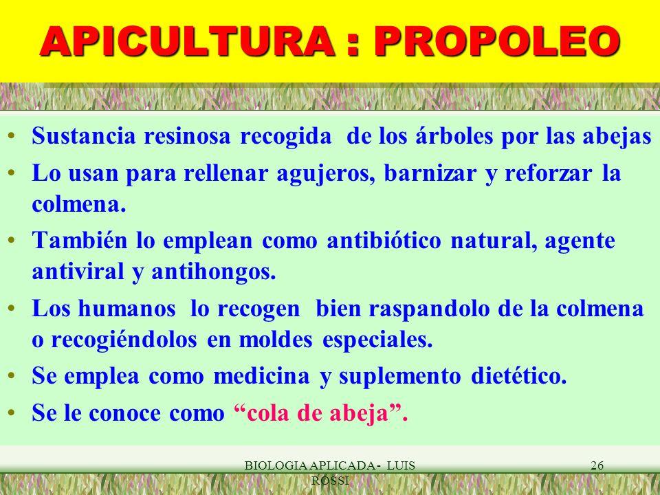BIOLOGIA APLICADA - LUIS ROSSI 26 APICULTURA : PROPOLEO Sustancia resinosa recogida de los árboles por las abejas Lo usan para rellenar agujeros, barn