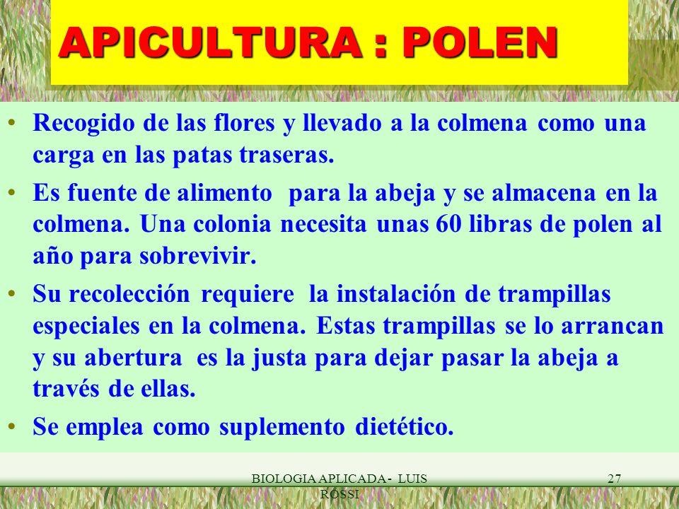 BIOLOGIA APLICADA - LUIS ROSSI 27 APICULTURA : POLEN Recogido de las flores y llevado a la colmena como una carga en las patas traseras. Es fuente de