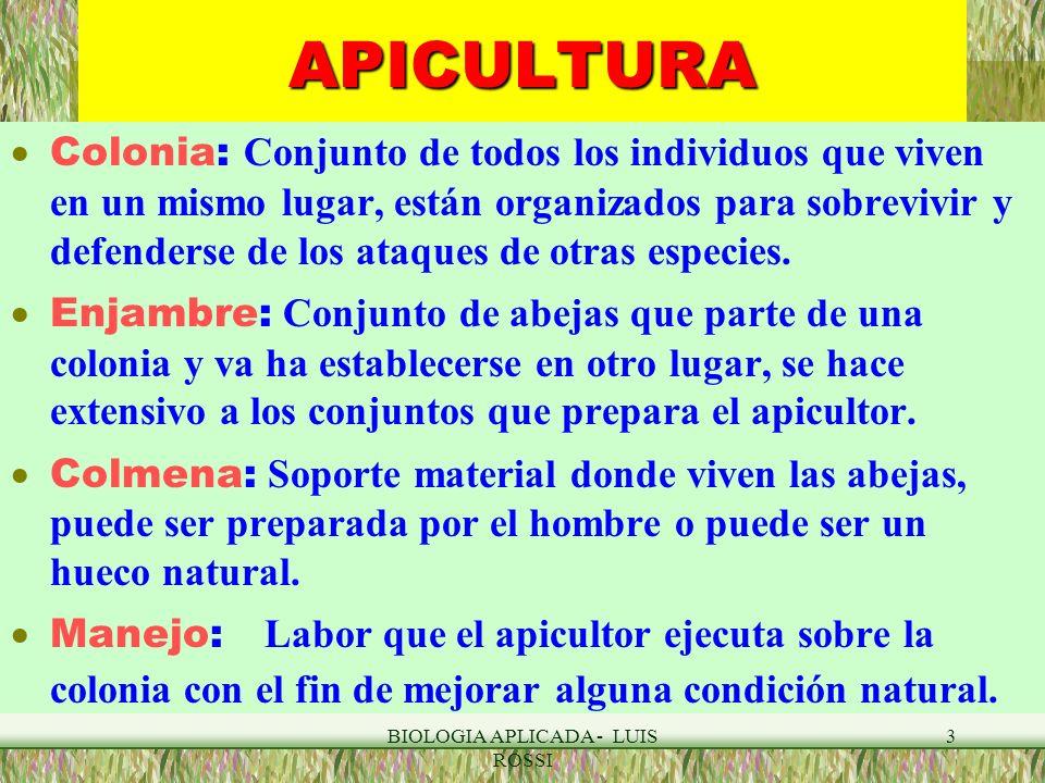 BIOLOGIA APLICADA - LUIS ROSSI 14 APICULTURA : EL ZANGANO Los zánganos nacen de huevos sin fecundar (haploides).