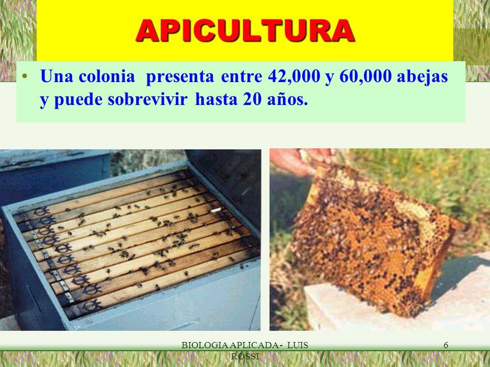 BIOLOGIA APLICADA - LUIS ROSSI 17APICULTURA INVESTIGACION: Son consideradas animales de laboratorio ideales.
