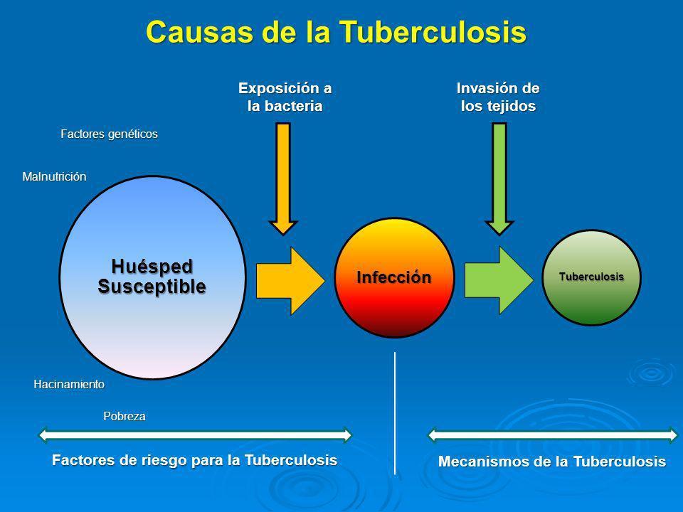 Huésped Susceptible Infección Tuberculosis Causas de la Tuberculosis Factores genéticos Malnutrición Hacinamiento Pobreza Exposición a la bacteria Inv