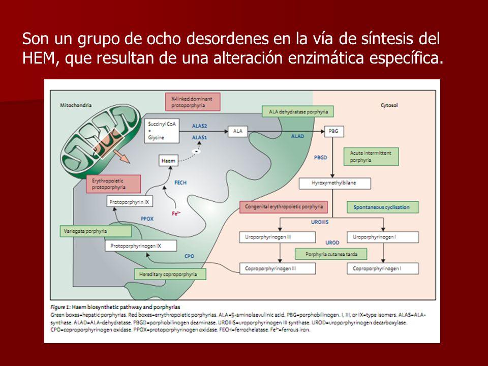 Son un grupo de ocho desordenes en la vía de síntesis del HEM, que resultan de una alteración enzimática específica.