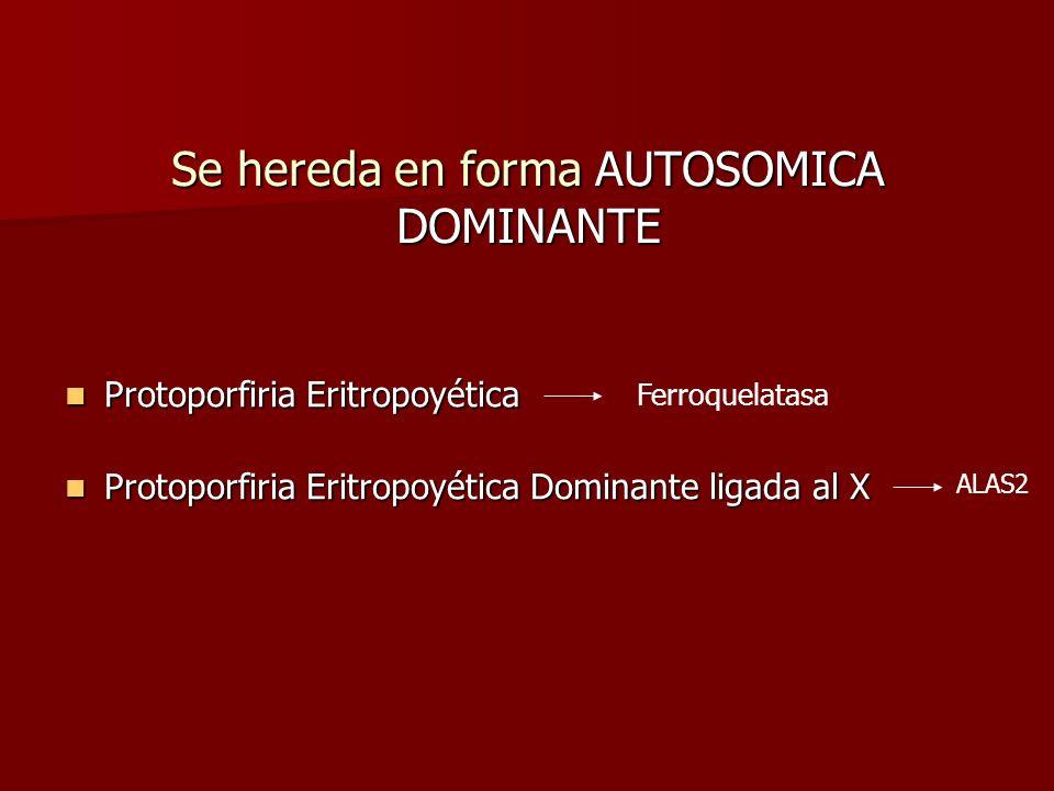 Se hereda en forma AUTOSOMICA DOMINANTE Protoporfiria Eritropoyética Protoporfiria Eritropoyética Protoporfiria Eritropoyética Dominante ligada al X P