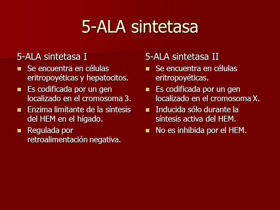 5-ALA sintetasa 5-ALA sintetasa I Se encuentra en células eritropoyéticas y hepatocitos. Se encuentra en células eritropoyéticas y hepatocitos. Es cod