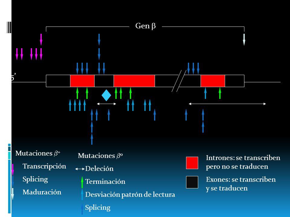 5 Gen Intrones: se transcriben pero no se traducen Exones: se transcriben y se traducen Mutaciones + Transcripción Splicing Maduración Mutaciones 0 De