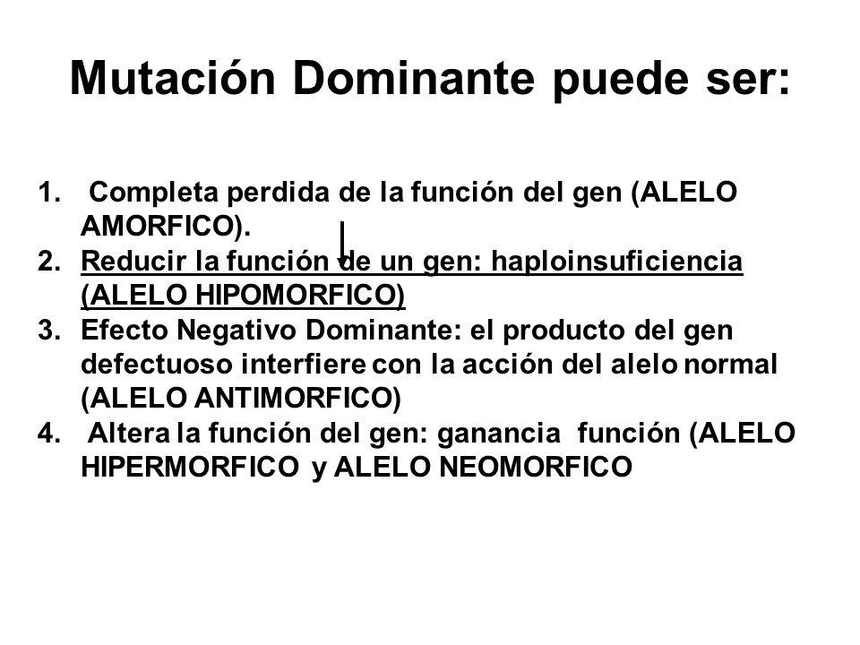 Mutación Dominante puede ser: 1. Completa perdida de la función del gen (ALELO AMORFICO). 2. Reducir la función de un gen: haploinsuficiencia (ALELO H