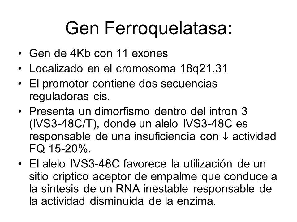 Gen Ferroquelatasa: Gen de 4Kb con 11 exones Localizado en el cromosoma 18q21.31 El promotor contiene dos secuencias reguladoras cis. Presenta un dimo