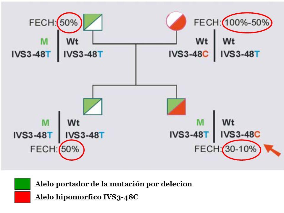 Alelo portador de la mutación por delecion Alelo hipomorfico IVS3-48C