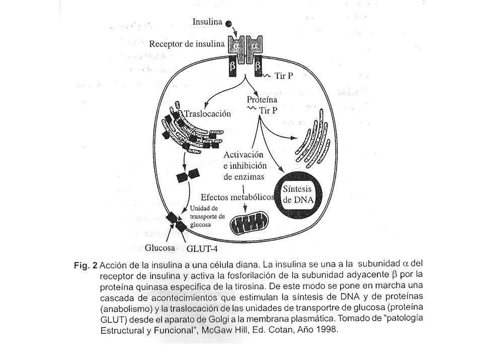Mutaciones del RI que producen el Síndrome de resistencia a la insulina Consecuencias clínicas de la resistencia severa: -Lesiones en la piel: acantocitosis nigricans.- se caracteriza por áreas pigmentadas de la piel que además se obs.