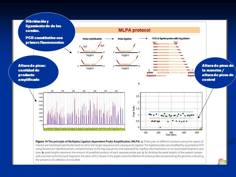 Hibridación y ligamiento de de las sondas. PCR cuantitativa con primers fluorescentes Altura de picos: cantidad de producto amplificado Altura de pico