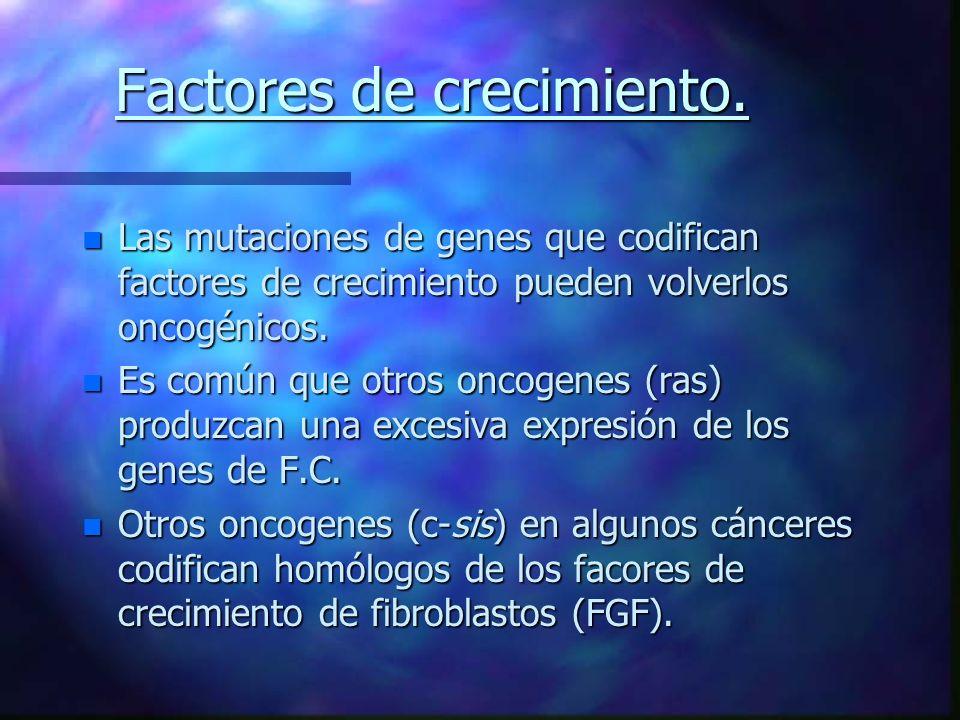 Factores de crecimiento. n Las mutaciones de genes que codifican factores de crecimiento pueden volverlos oncogénicos. n Es común que otros oncogenes