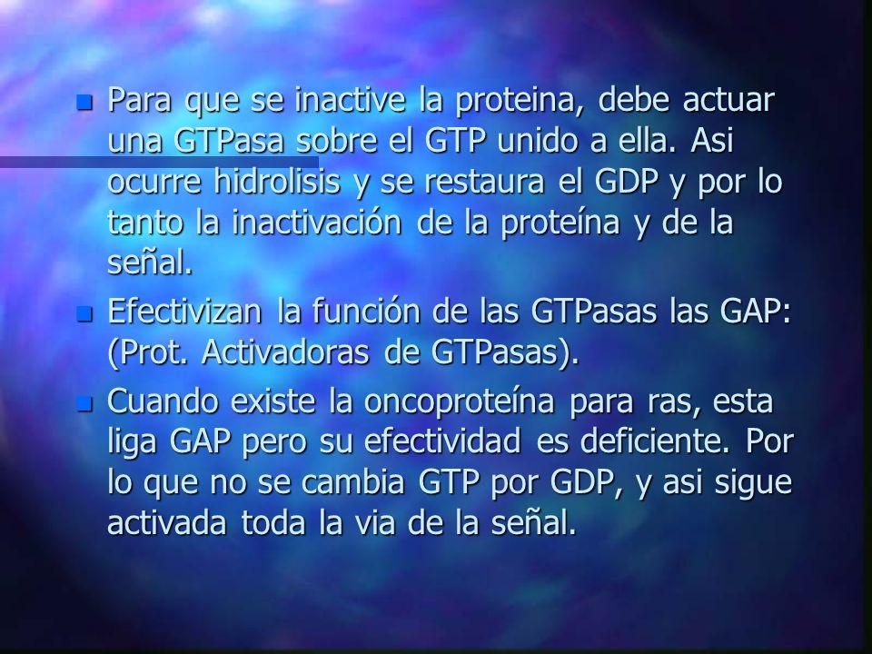 n Para que se inactive la proteina, debe actuar una GTPasa sobre el GTP unido a ella. Asi ocurre hidrolisis y se restaura el GDP y por lo tanto la ina