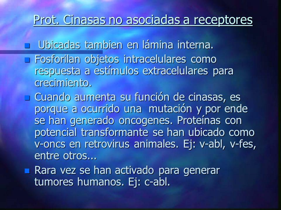 Prot. Cinasas no asociadas a receptores n Ubicadas tambien en lámina interna. n Fosforilan objetos intracelulares como respuesta a estímulos extracelu