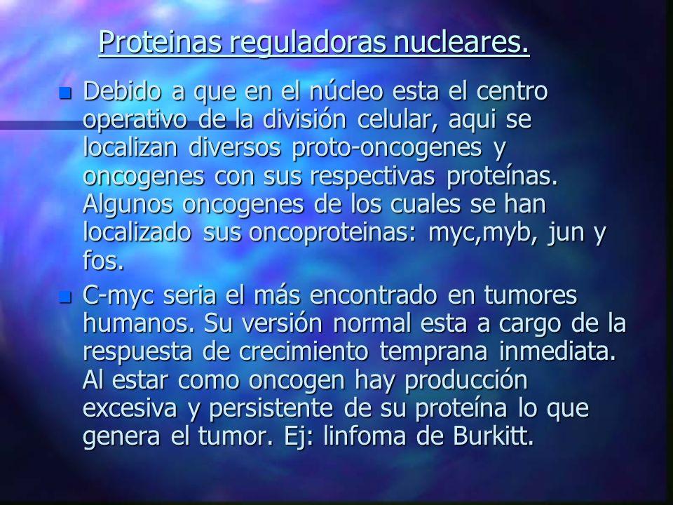 Proteinas reguladoras nucleares. n Debido a que en el núcleo esta el centro operativo de la división celular, aqui se localizan diversos proto-oncogen