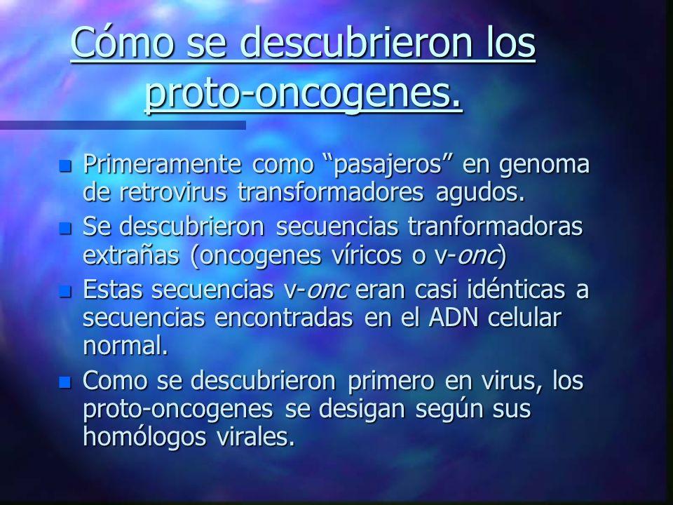 Cómo se descubrieron los proto-oncogenes. n Primeramente como pasajeros en genoma de retrovirus transformadores agudos. n Se descubrieron secuencias t