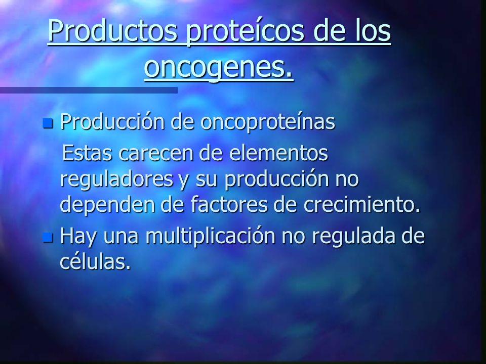 Productos proteícos de los oncogenes. n Producción de oncoproteínas Estas carecen de elementos reguladores y su producción no dependen de factores de