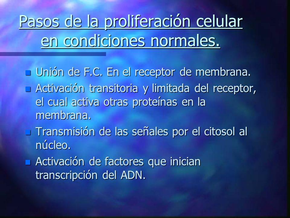 Pasos de la proliferación celular en condiciones normales. n Unión de F.C. En el receptor de membrana. n Activación transitoria y limitada del recepto