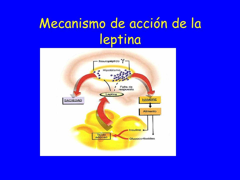 Leptina y regulación del peso corporal