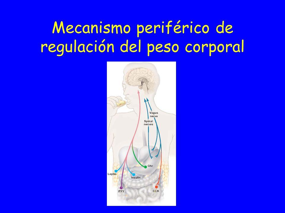 Mecanismo central de regulación del peso corporal