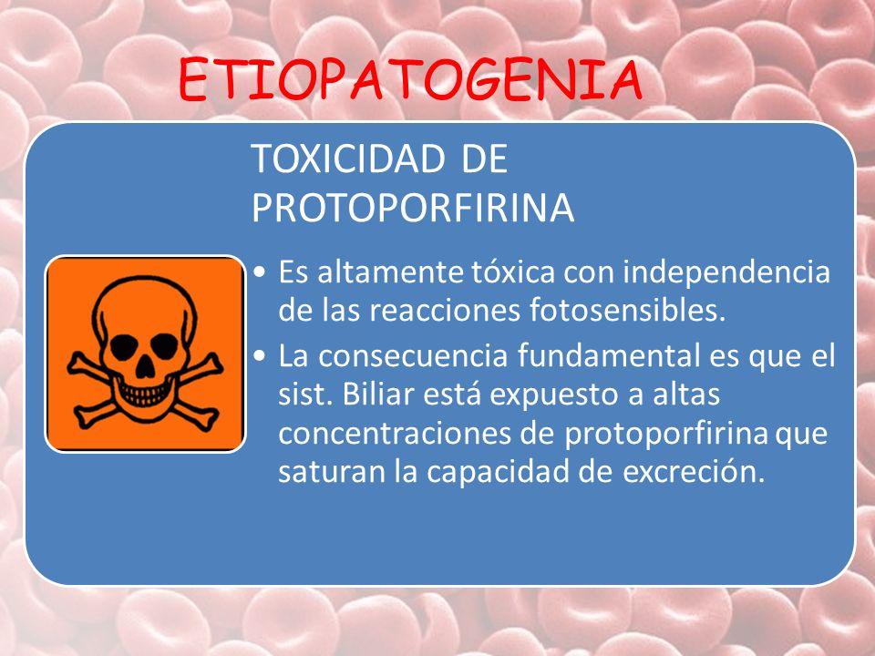 ETIOPATOGENIA TOXICIDAD DE PROTOPORFIRINA Es altamente tóxica con independencia de las reacciones fotosensibles. La consecuencia fundamental es que el