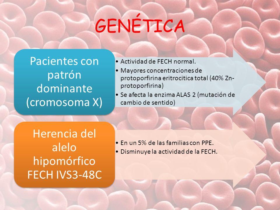 GENÉTICA Actividad de FECH normal. Mayores concentraciones de protoporfirina eritrocitica total (40% Zn- protoporfirina) Se afecta la enzima ALAS 2 (m