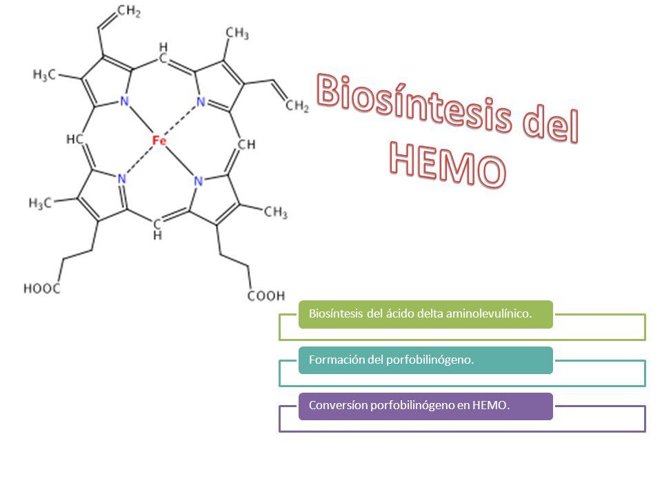 Biosíntesis del ácido delta aminolevulínico.Formación del porfobilinógeno.Conversíon porfobilinógeno en HEMO.