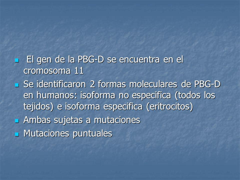 El gen de la PBG-D se encuentra en el cromosoma 11 El gen de la PBG-D se encuentra en el cromosoma 11 Se identificaron 2 formas moleculares de PBG-D e