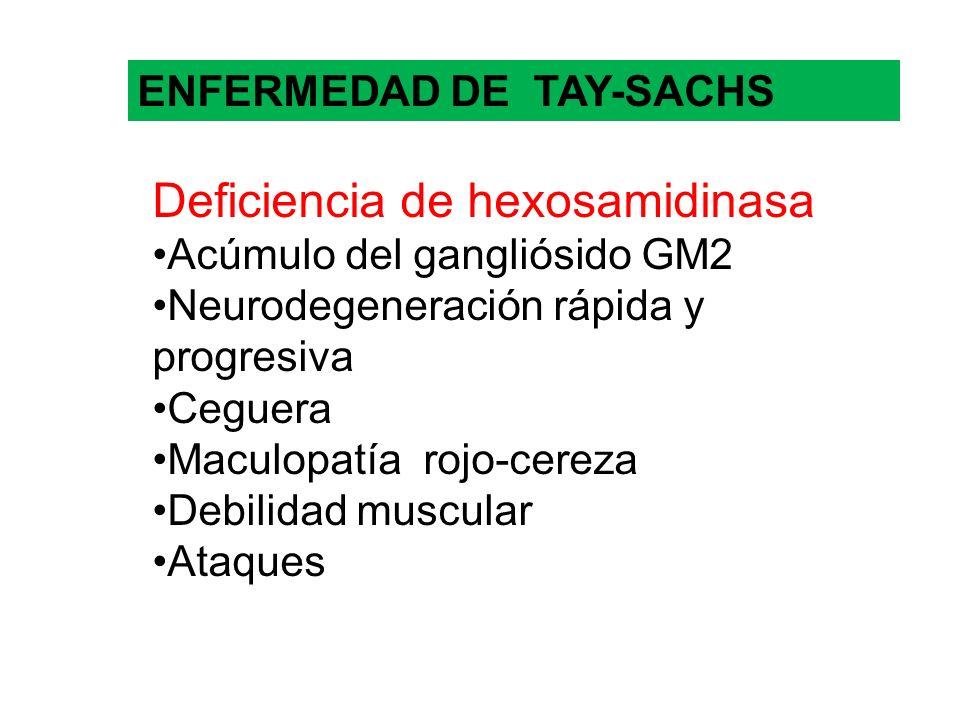 ENFERMEDAD DE TAY-SACHS Deficiencia de hexosamidinasa Acúmulo del gangliósido GM2 Neurodegeneración rápida y progresiva Ceguera Maculopatía rojo-cerez