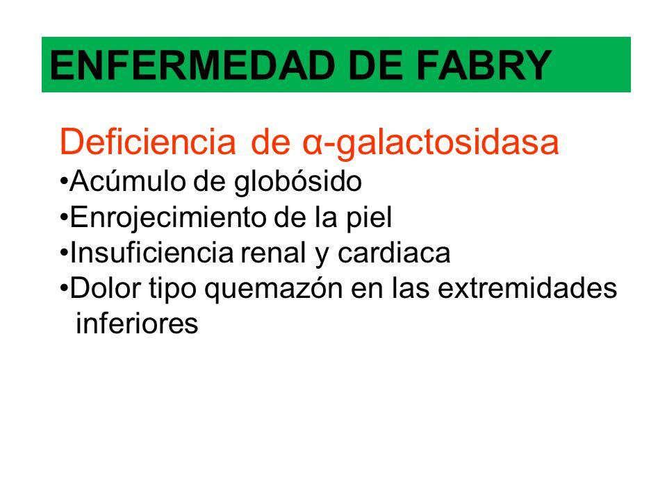 ENFERMEDAD DE FABRY Deficiencia de α-galactosidasa Acúmulo de globósido Enrojecimiento de la piel Insuficiencia renal y cardiaca Dolor tipo quemazón e