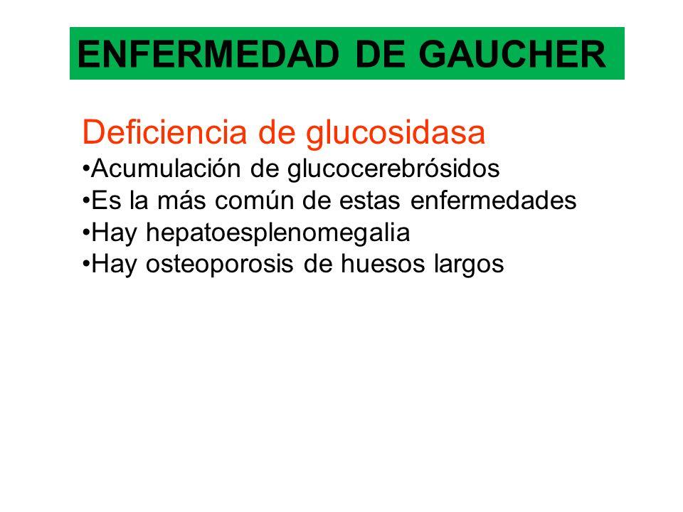 ENFERMEDAD DE GAUCHER Deficiencia de glucosidasa Acumulación de glucocerebrósidos Es la más común de estas enfermedades Hay hepatoesplenomegalia Hay o