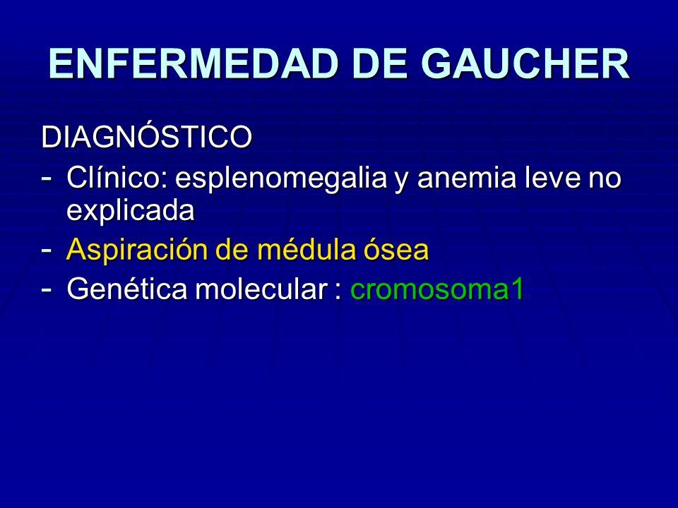 ENFERMEDAD DE GAUCHER DIAGNÓSTICO - Clínico: esplenomegalia y anemia leve no explicada - Aspiración de médula ósea - Genética molecular : cromosoma1