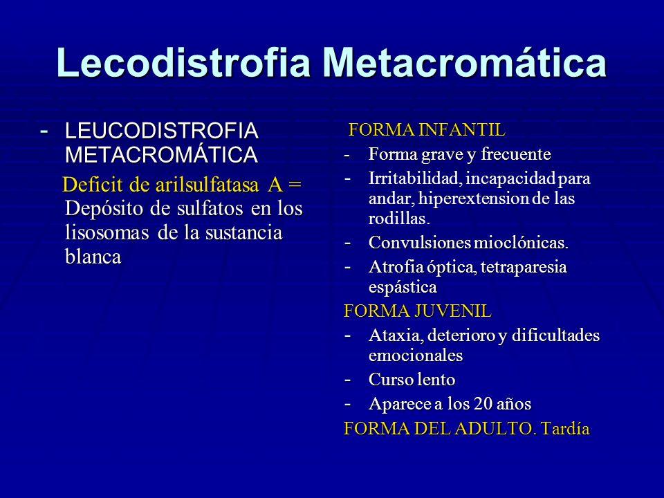 LEUCODISTROFIA METACROMÁTICA Los sulfatos no degradados se depositan en la sustancia blanca = desmielinización Los sulfatos no degradados se depositan en la sustancia blanca = desmielinización Reducción en el número de células de oligodendroglia Reducción en el número de células de oligodendroglia No hay afectación visceral ni de la médula ósea No hay afectación visceral ni de la médula ósea