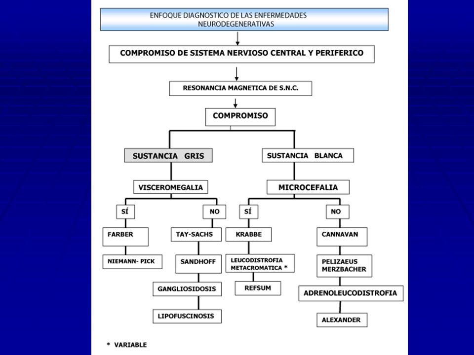 LEUCODISTROFIA METACROMÁTICA TRATAMIENTO - No existe - El transplante de médula ósea mejora los niveles enzimáticos,pero no el deterioro neurológico PRONÓSTICO - En la forma infantil tardía viven 2-4 años y en la juvenil 4-6 años después del diagnóstico