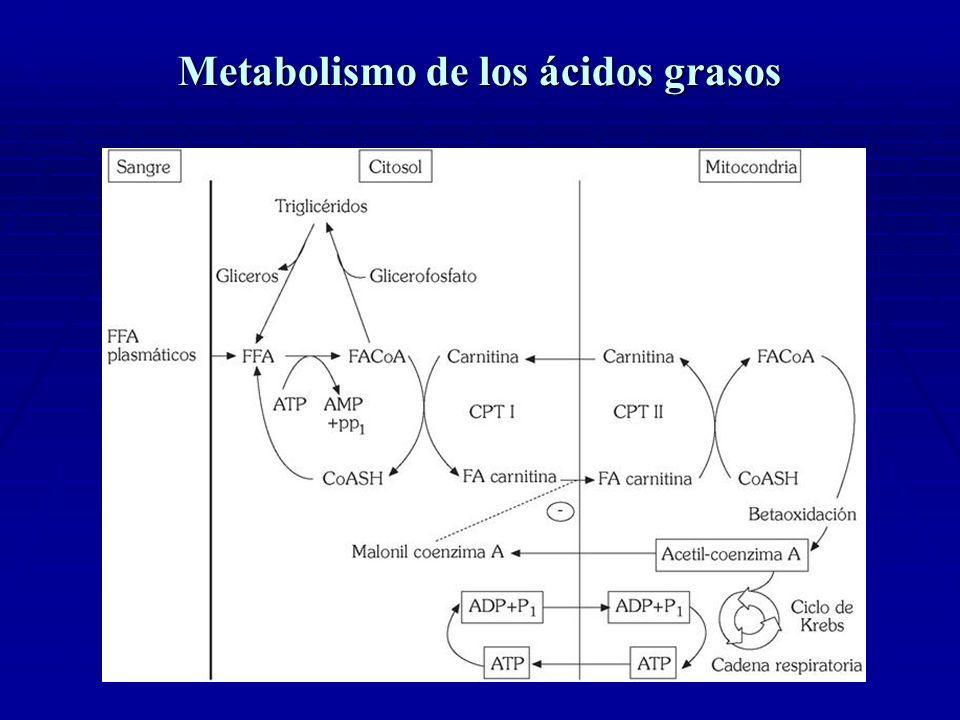 Trastornos de la beta-oxidación mitocondrial de los ácidos grasos Trastornos de la beta-oxidación mitocondrial de los ácidos grasos ( MCAD) Los trastornos de la β-Oxidación : grupo complejo de enfermedades: >25 entidades diferentes.