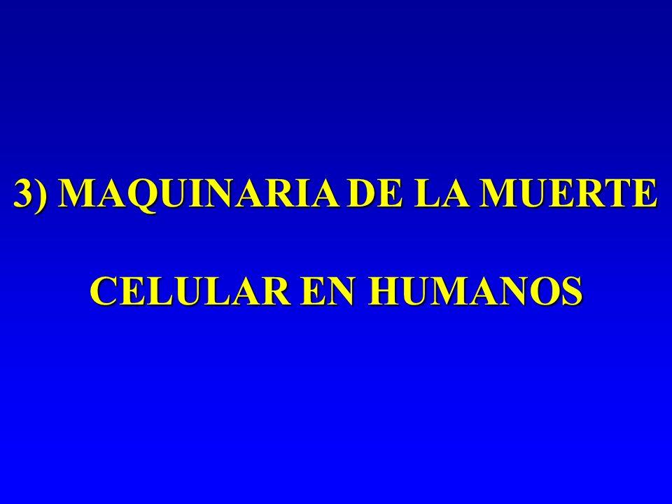 3) MAQUINARIA DE LA MUERTE CELULAR EN HUMANOS