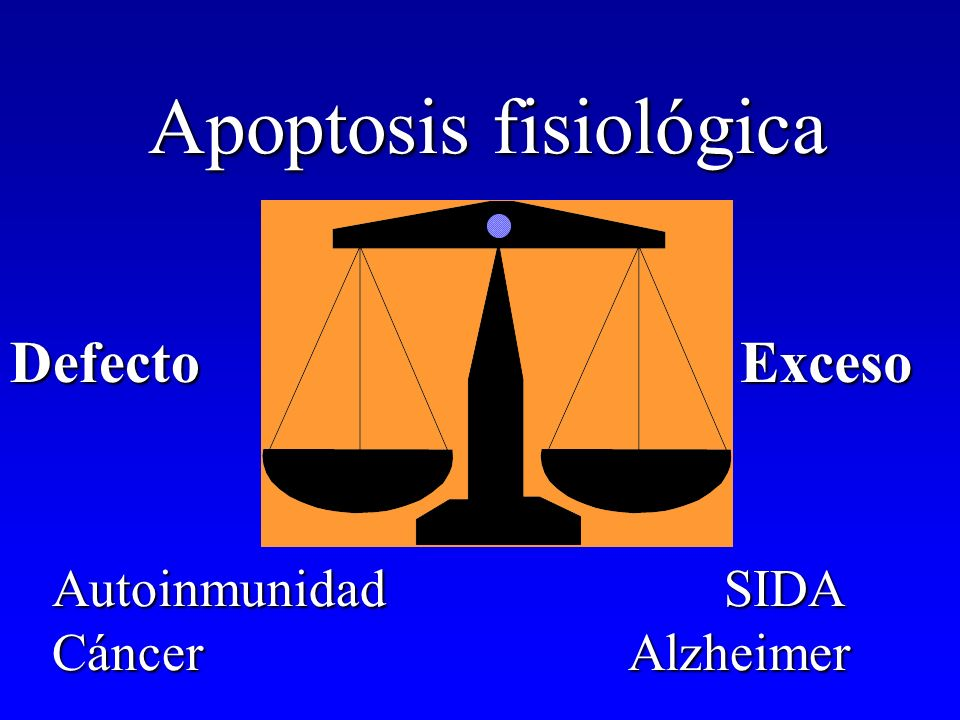 Apoptosis y patología Defecto de apoptosis –Neoplasia linfomas B-CLL –Enfermedad autoinmunne LES AR –Infección citoprotectora y desarrollo de tumores EBV Exceso de apoptosis –Infección por HIV –Daños por respuesta inmune Hepatitis virales Diabetes mellitus tipo 2 –E.