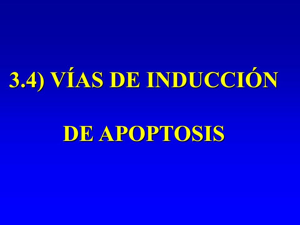 3.4) VÍAS DE INDUCCIÓN DE APOPTOSIS