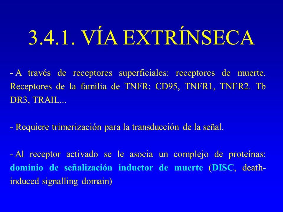 3.4.1. VÍA EXTRÍNSECA - A través de receptores superficiales: receptores de muerte. Receptores de la familia de TNFR: CD95, TNFR1, TNFR2. Tb DR3, TRAI