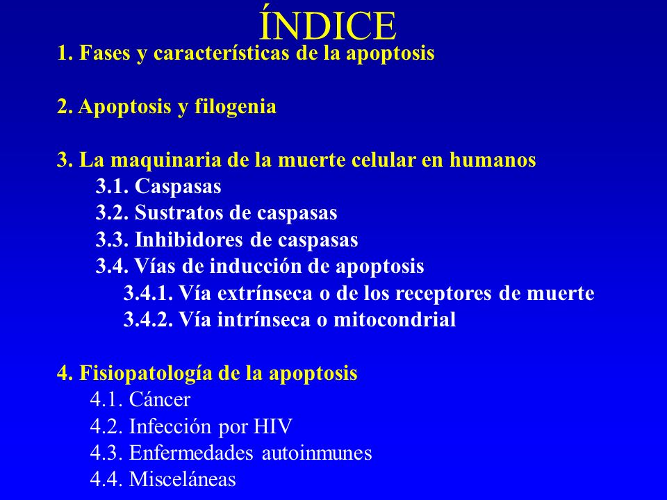 ÍNDICE 1. Fases y características de la apoptosis 2. Apoptosis y filogenia 3. La maquinaria de la muerte celular en humanos 3.1. Caspasas 3.2. Sustrat