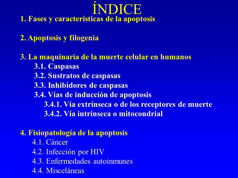 FISIOPATOLOGÍA DE LA APOPTOSIS 1.Cáncer 2. Infección por HIV 3.