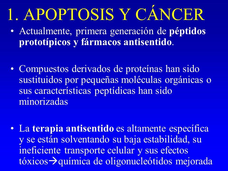1. APOPTOSIS Y CÁNCER Actualmente, primera generación de péptidos prototípicos y fármacos antisentido. Compuestos derivados de proteínas han sido sust