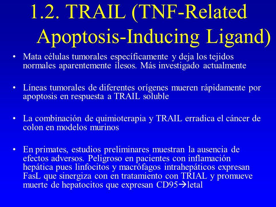 1.2. TRAIL (TNF-Related Apoptosis-Inducing Ligand) Mata células tumorales específicamente y deja los tejidos normales aparentemente ilesos. Más invest