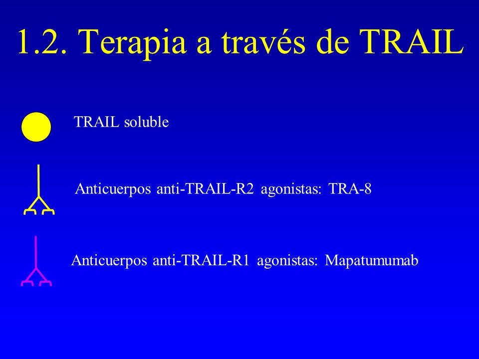 1.2. Terapia a través de TRAIL TRAIL soluble Anticuerpos anti-TRAIL-R2 agonistas: TRA-8 Anticuerpos anti-TRAIL-R1 agonistas: Mapatumumab