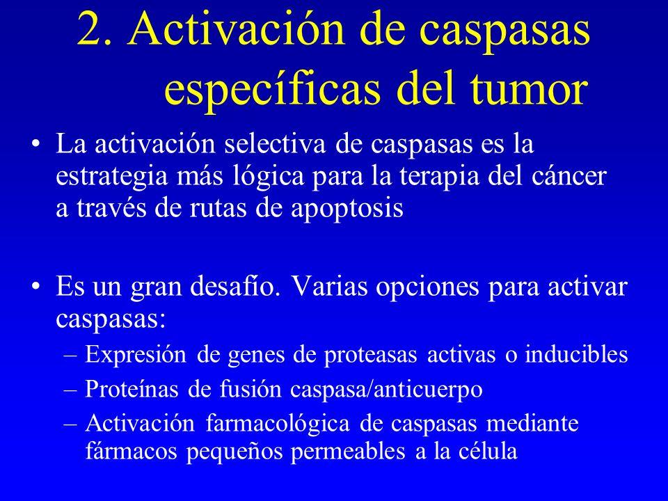 2. Activación de caspasas específicas del tumor La activación selectiva de caspasas es la estrategia más lógica para la terapia del cáncer a través de