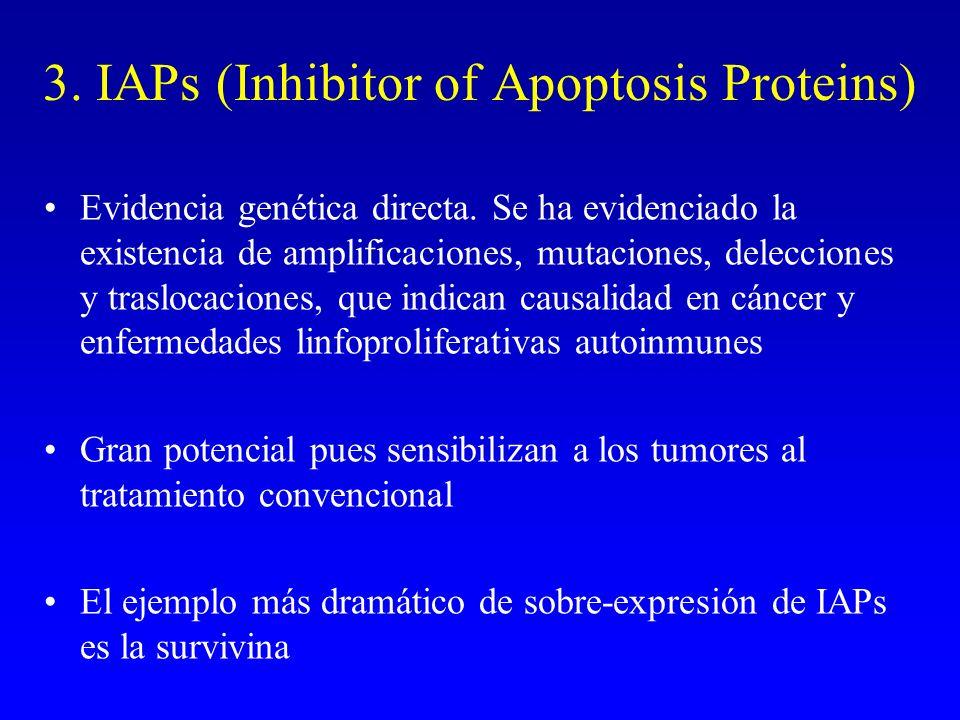 3. IAPs (Inhibitor of Apoptosis Proteins) Evidencia genética directa. Se ha evidenciado la existencia de amplificaciones, mutaciones, delecciones y tr