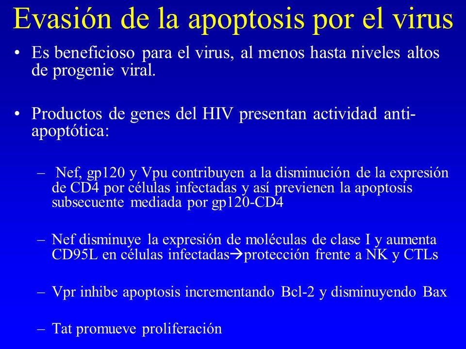 Evasión de la apoptosis por el virus Es beneficioso para el virus, al menos hasta niveles altos de progenie viral. Productos de genes del HIV presenta