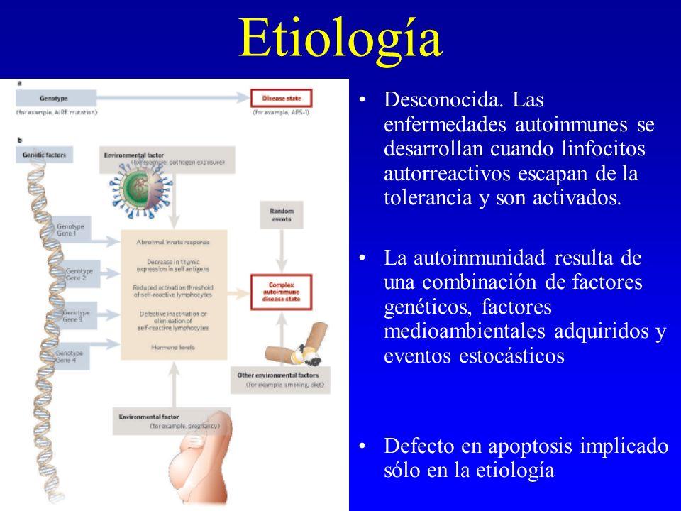 Etiología Desconocida. Las enfermedades autoinmunes se desarrollan cuando linfocitos autorreactivos escapan de la tolerancia y son activados. La autoi