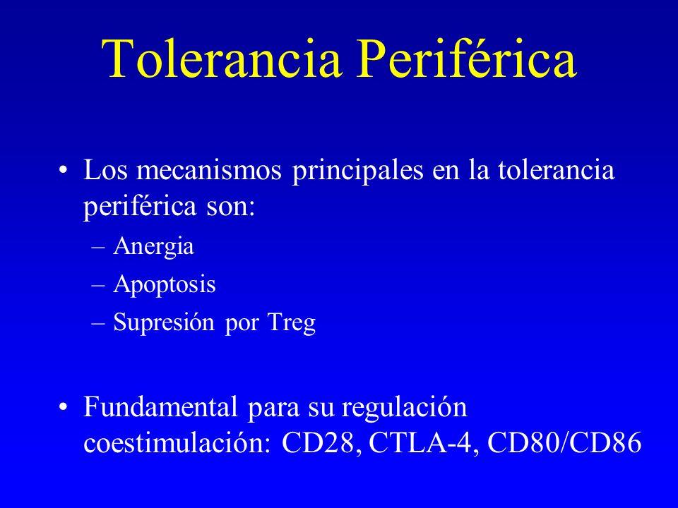 Tolerancia Periférica Los mecanismos principales en la tolerancia periférica son: –Anergia –Apoptosis –Supresión por Treg Fundamental para su regulaci
