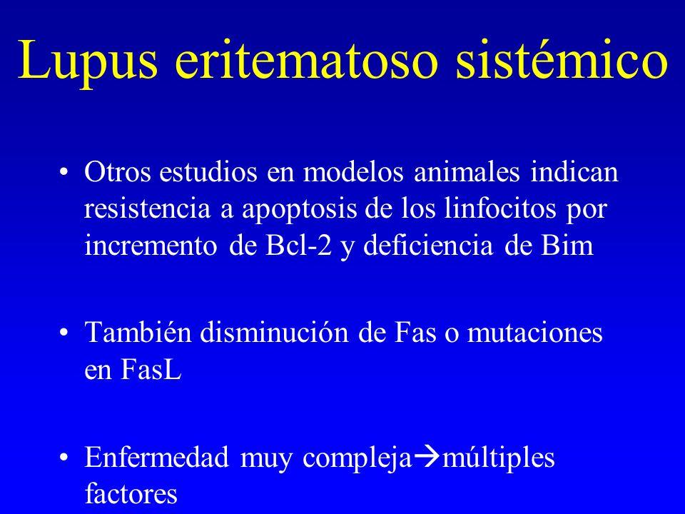 Lupus eritematoso sistémico Otros estudios en modelos animales indican resistencia a apoptosis de los linfocitos por incremento de Bcl-2 y deficiencia